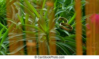 wedding rings lie on the green grass camera movement -...