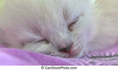 White cute kitty cat sleeping on bed - White cute kitty cat...