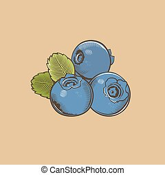 Bilberry in vintage style. Colored vector illustration.