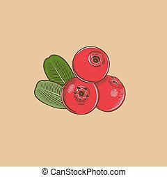 Cowberry in vintage style. Colored vector illustration