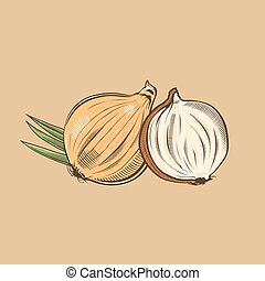 Onion in vintage style. Colored vector illustration