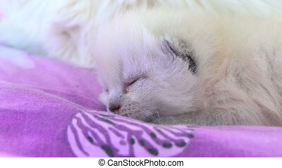 white kitten cat sleeping on a bed