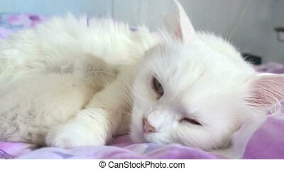 cat white feeding kitten sleeping bed mother and son - cat...