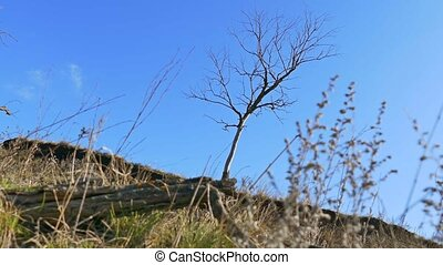 dry lonely tree standing on the ground grass nature...