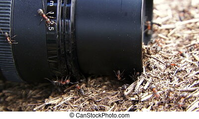Ants attacking the camera