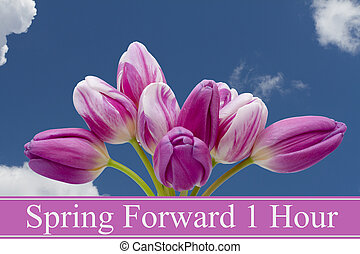 Spring Time Change, Some tulips with blue background and...