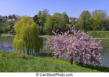Pond at Falaise in France - Pond and prunus tree blossom at...