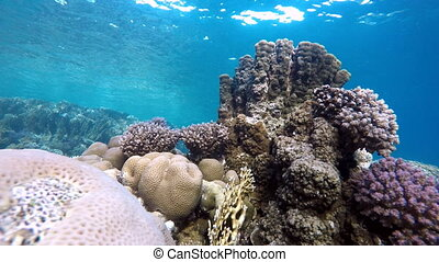 Submarine life Beautiful coral ree - Coral reef Exotic...