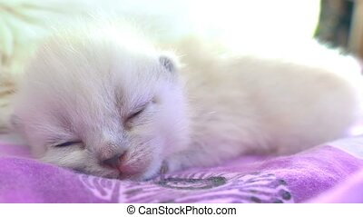 White cute kitty cat sleeping on the bed - White cute kitty...