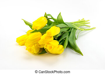 yellow tulips on a light background
