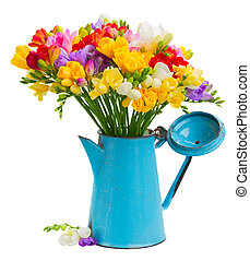 Fresh freesia flowers in blue pot isolated on white...