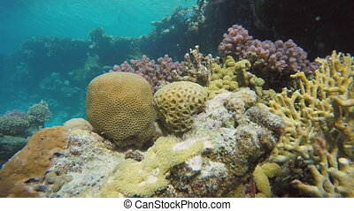 Lagoon, Diving, Submarine life - Coral reef Exotic fishes...