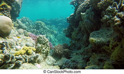 Tropical, Scuba, Diving on a tropic - Coral reef Exotic...