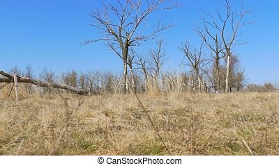 dry tree standing lonely on the ground grass nature landscape movement