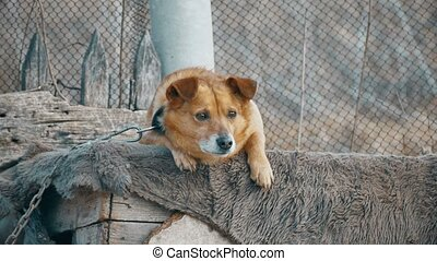 dog sad is sitting bored - dog sad is sitting bored at the...
