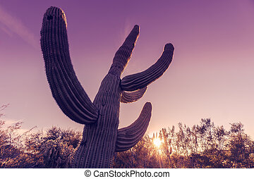 Saguaro cactus tree - Extreme wide angle shot of Saguaro...