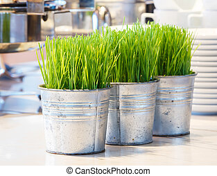 Wheatgrass sprouts - Close up wheatgrass sprouts in tin pot...