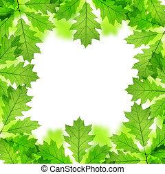 spring leaves of oak tree - Frame from spring leaves of oak...