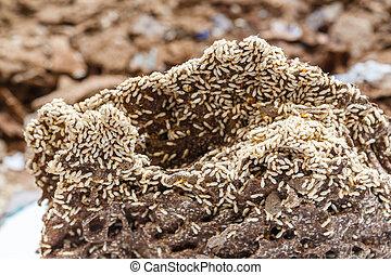 papel, termita, comido