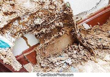 Paper eaten by termite - Close up damaged paper eaten by...