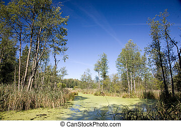 Swampy valley of Lesna River in sunny autumnal day with...