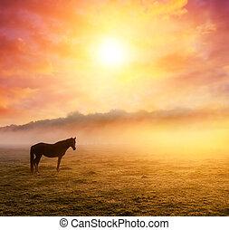 caballos, pasto, en, pasto,