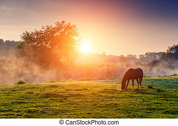 horses grazing on pasture - Arabian horses grazing on...