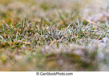 the frozen grass