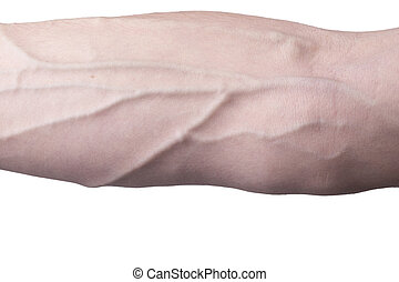 Veins on an arm - Male arm with veins