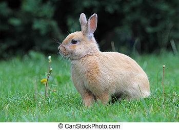 Rabbit, Easter