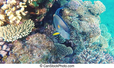 Exotic fish swim near coral reef