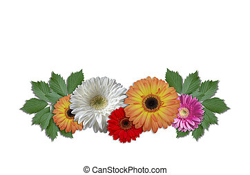 Daisies with green ivy leaves - Group flowers daisies with...