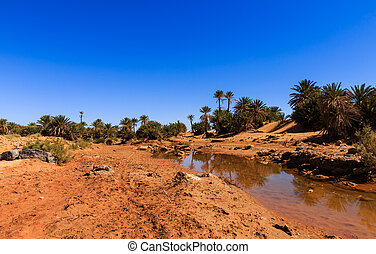 water in the oasis, Sahara desert