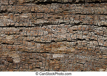 Vintage wood texture, abstract background, grunge