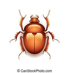 Egyptian scarab beetle isolated on white vector - Egyptian...