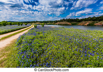 viejo, Colorado, Suciedad, campo, wildflowers, camino,...