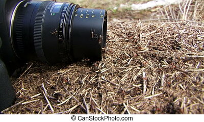 Ants crawling on the lens