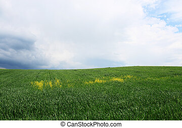 Green field with rain clouds - Green field and blue sky with...