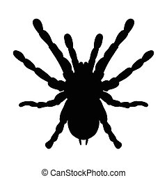 insect in magnifier Brachypelma smithi, spider female Sketch...