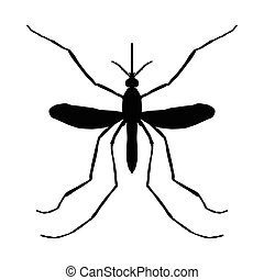 Insect silhouette. Insect. a realistic mosquito. Culex pipiens Mosquito silhouette. Mosquito isolated on white background. . hand-drawn mosquito. Vector