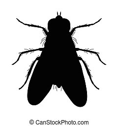 Insect silhouette. Sticker ground beetle bug. Carabidae...