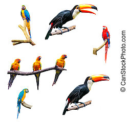 Set of isolated tropical parrots on a white background