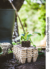 Garden - Spring garden. Seedlings in soil. Garden tools and...