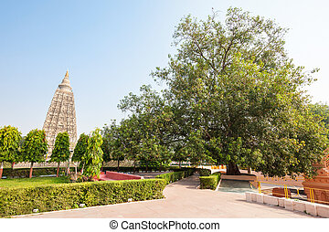 Mahabodhi Temple, Bodhgaya - The Bodhi Tree is a large and...
