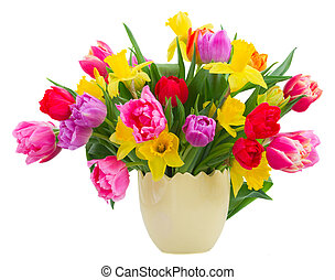 bouquet of tulips and daffodils - bunch of fresh pink,...