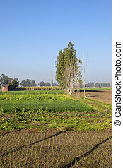 punjabi agriculture - small areas of crops in the punjab...