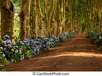 azores - path with tree on two side in azores