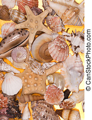 A collection of seashells