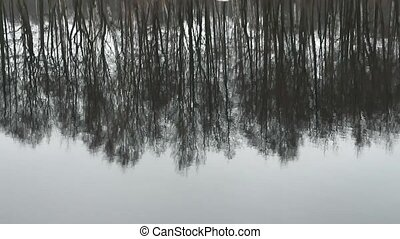 trees inverted reflection - Trees reflected in water...