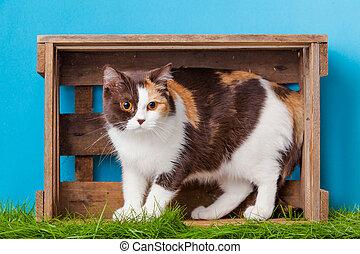 Cat. Animal portrait